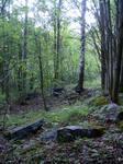 13690B Pyynikki woods by ciannwn-stock