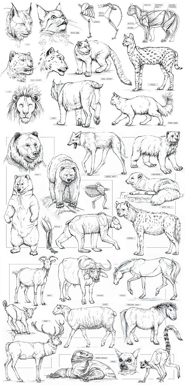 Animals sketching by AncientKing