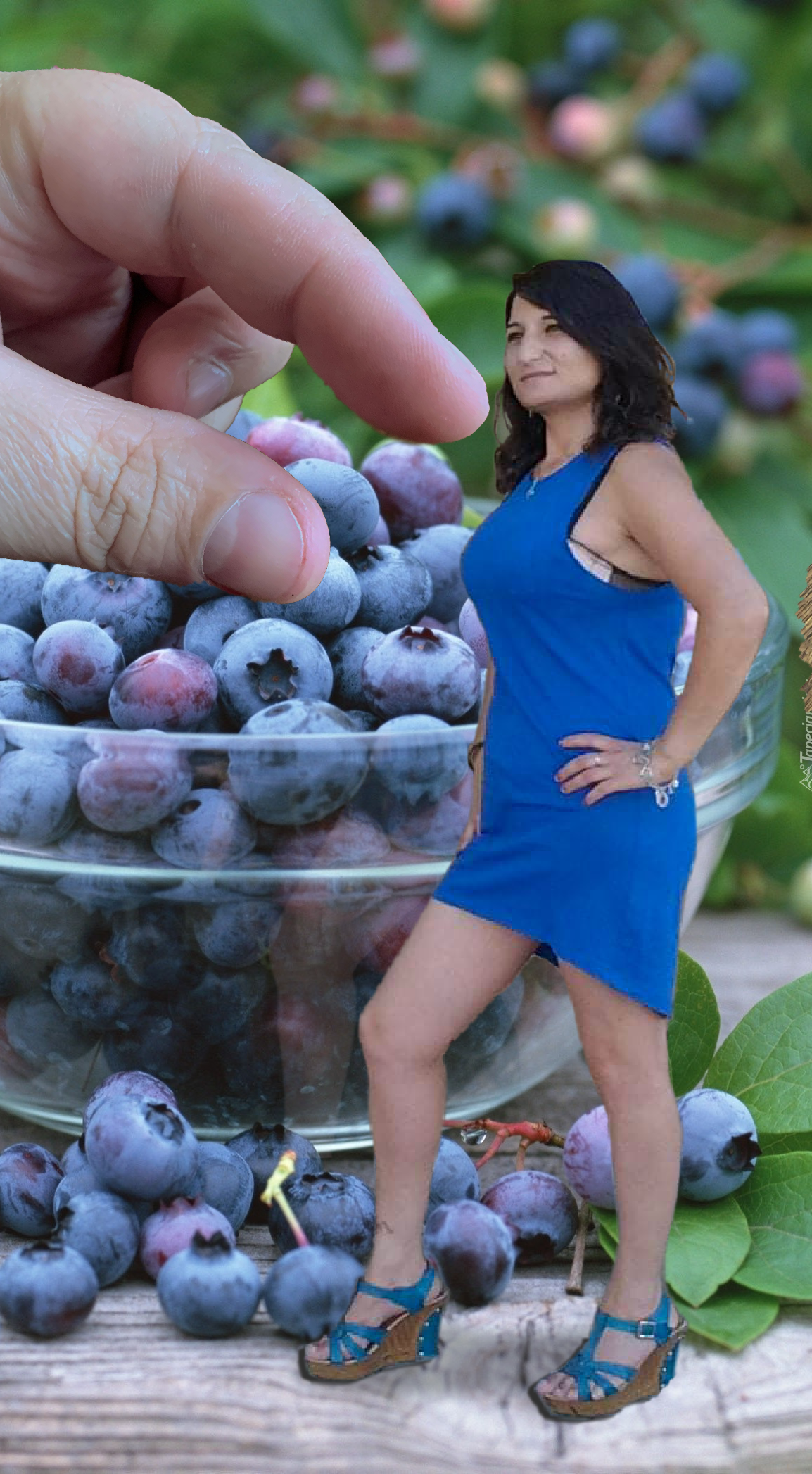 fingers reaching to pluck blue clad breast instead of boring berry