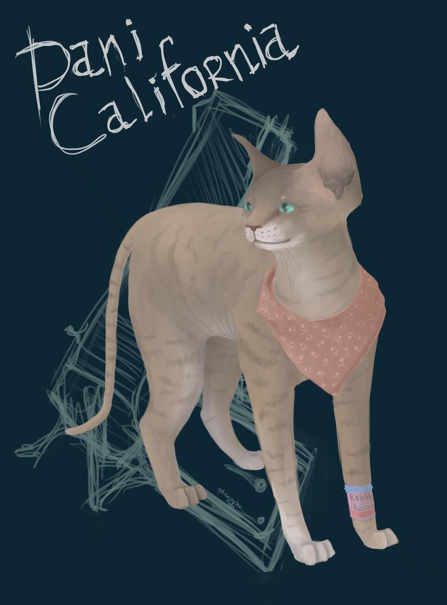 Dani California by katzendiosa