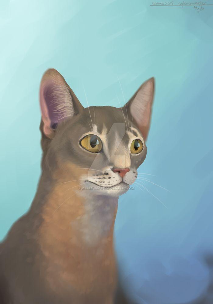 Abyssinian cat by katzendiosa