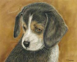 Beagle by SavageArt