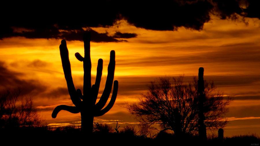 Saguaro Sunset by JackHayden