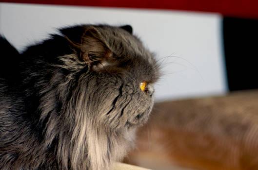 Kovu My cat