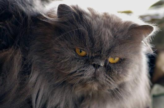 Kovu My cat 2