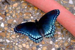 Butterfly by pinksock-stock