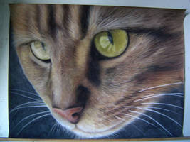 Tabby cat demo drawing by chipset
