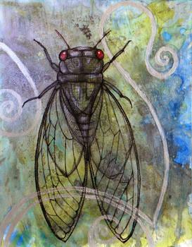 Red-Eyed Cicada