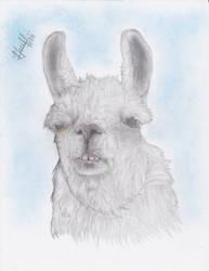 Badass Looking Llama by marvincastillo