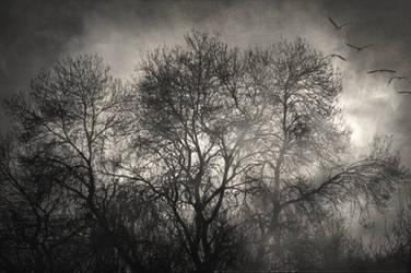 Beyond the morning by Uomo-nella-Pioggia