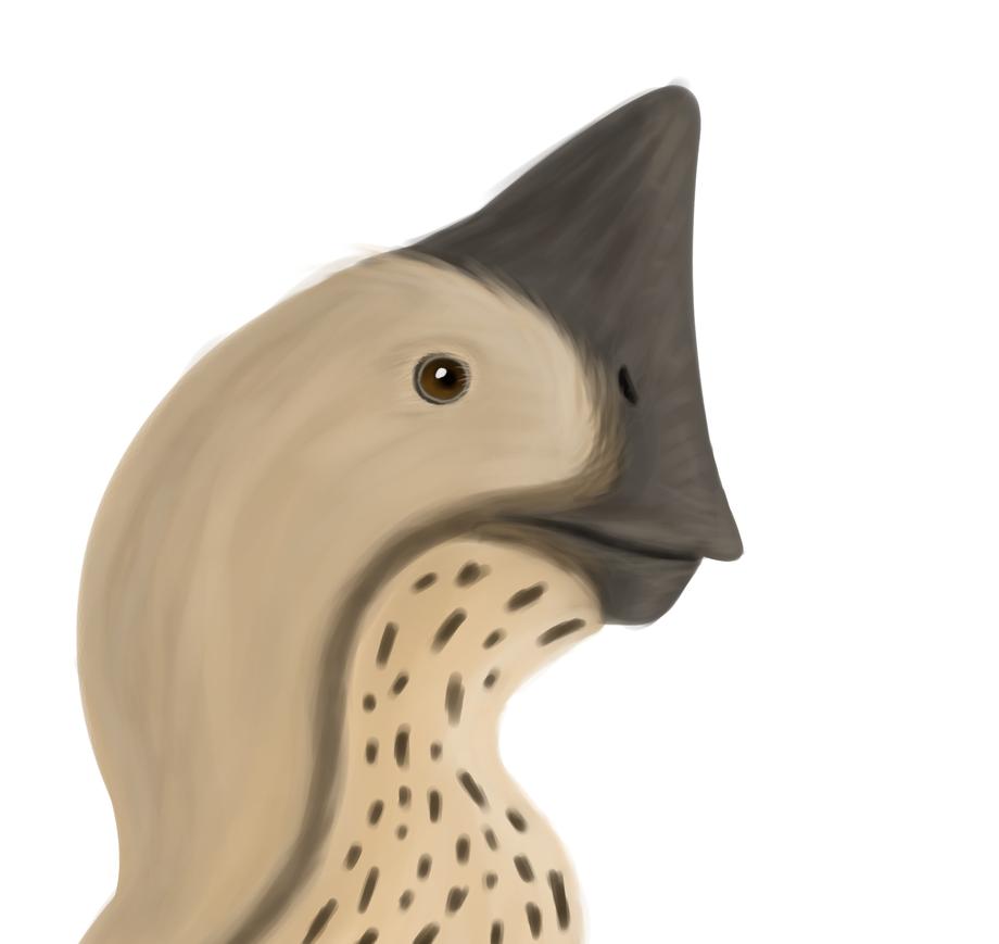 Conchoraptor gracilis by TKWTH