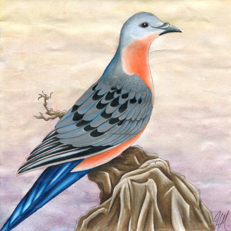 Passenger Pigeon by frogmastr1
