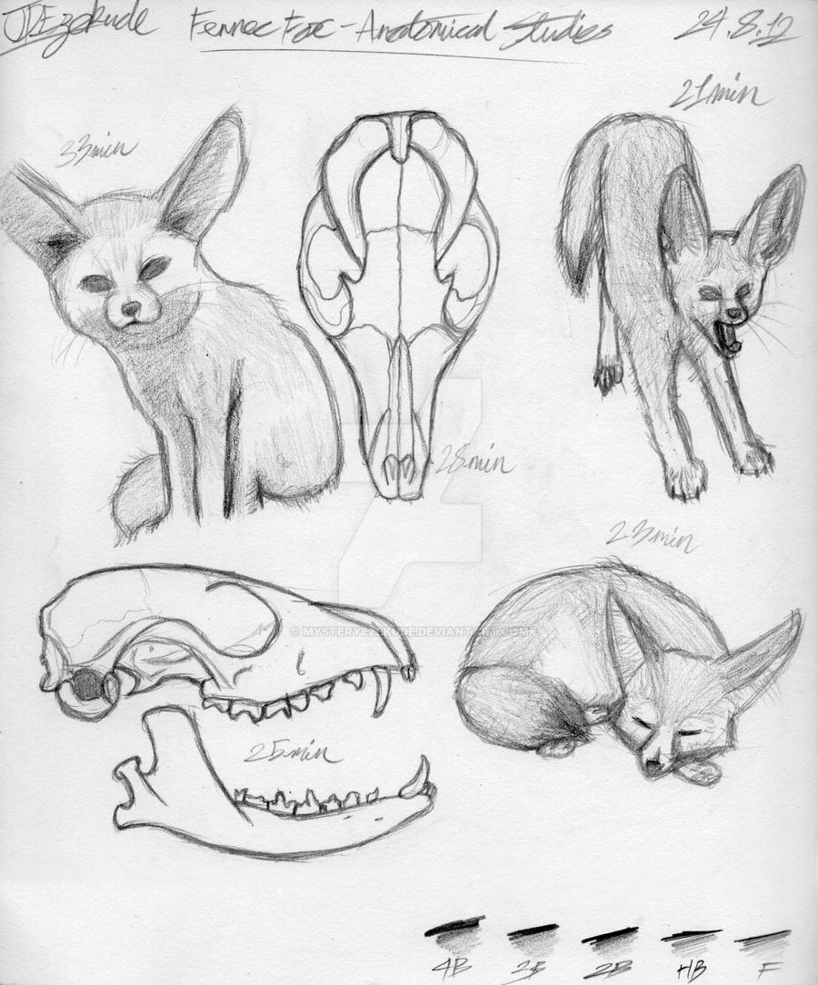 Animal Anatomy Sketches 3 by MysteryEzekude on DeviantArt