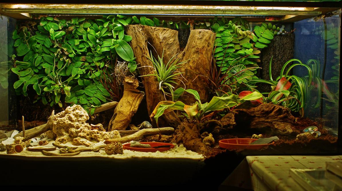 hermit crab terrarium by chromaticbokeh on deviantart. Black Bedroom Furniture Sets. Home Design Ideas