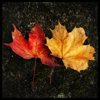 Autumnal Colours by ChromaticBokeh
