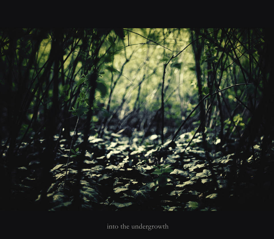 into the undergrowth by ChromaticBokeh