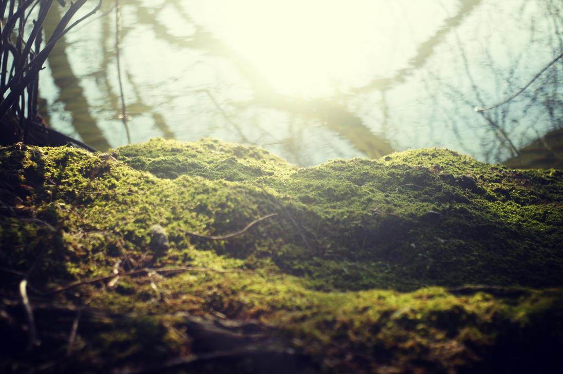 miniature landscape by ChromaticBokeh