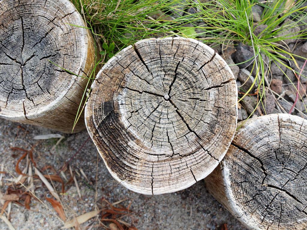 Stumps by ChromaticBokeh