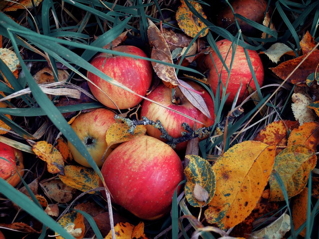 Apples by ChromaticBokeh
