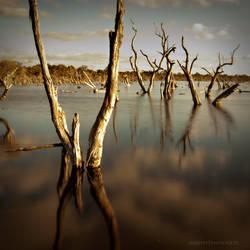 Reflections by AbbottPhotoArt