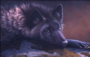 LonelyBlackWolf's Profile Picture