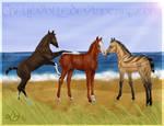 The Varjo Foals