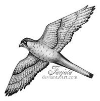 The Falcon by Faejala