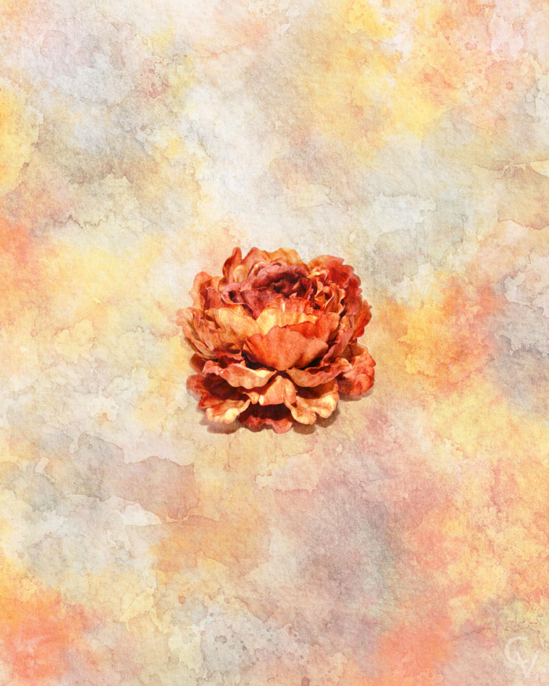 Orange Peony Watercolor by crimsonvermillion