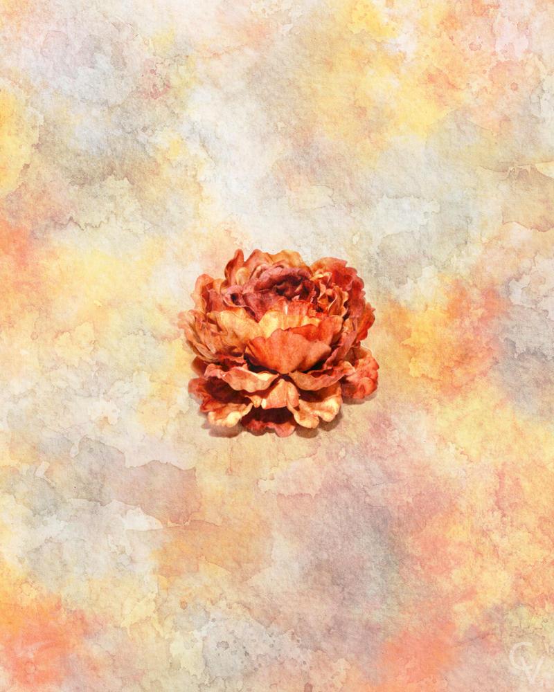 Orange Peony Watercolor by crimsonvermillion