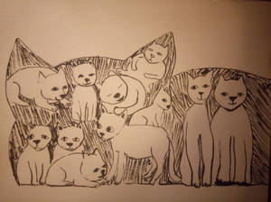 Cats and cats