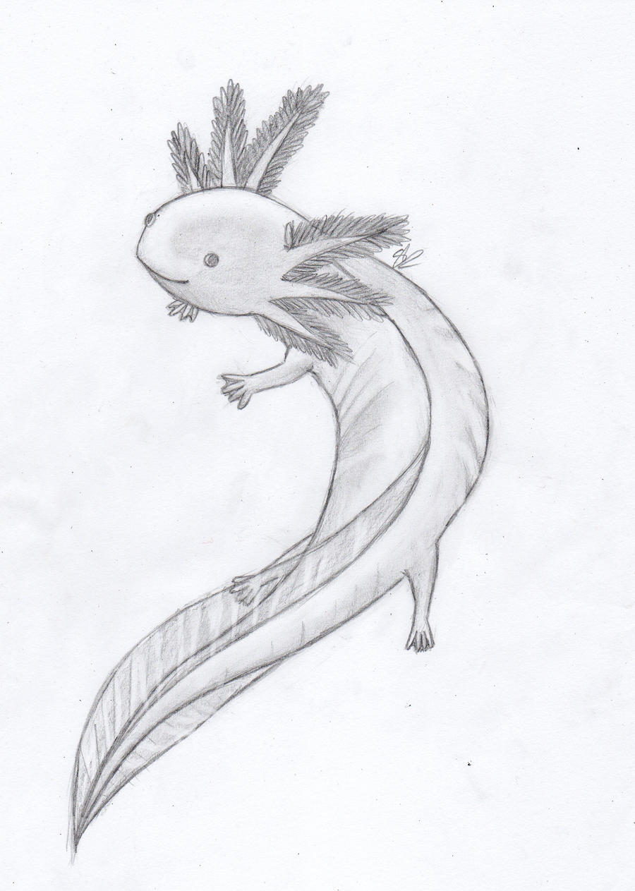 Axolotl by Lithainile on DeviantArt
