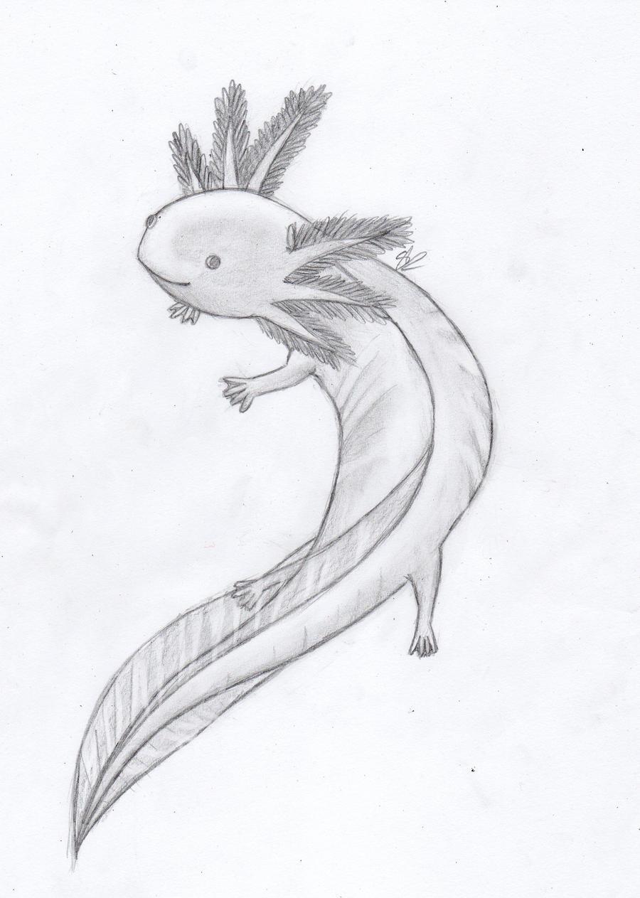 Axolotl by Lithainile on DeviantArt