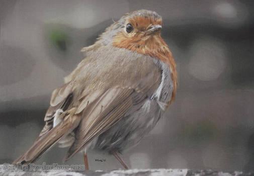 Robin: The Bird Wonder