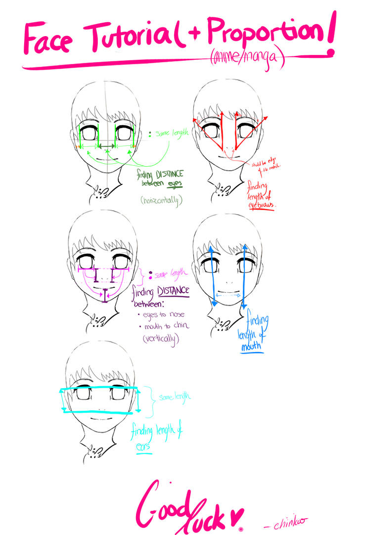 Animal Faces on Humans Anime Face Tutorial Proportion