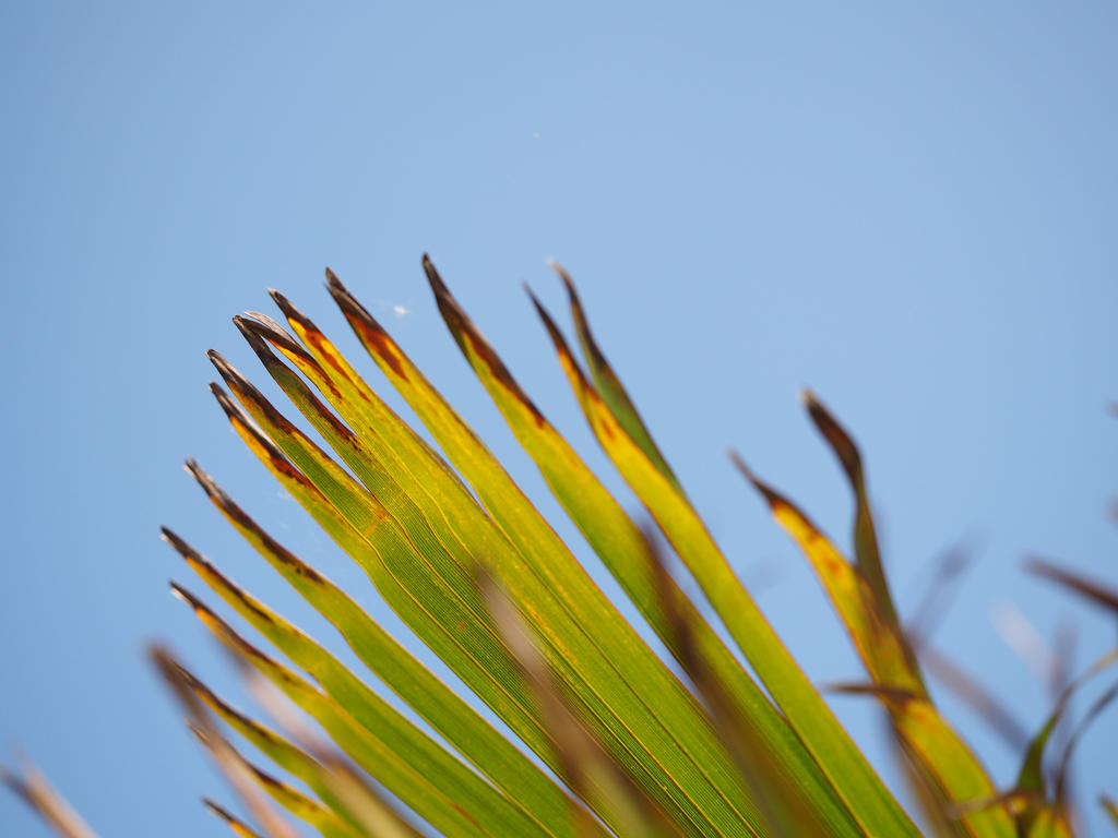 Tropical Hues III by WillowsAtSunset