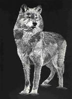 Wolf by Cul2Lz