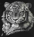 Tiger by Cul2Lz