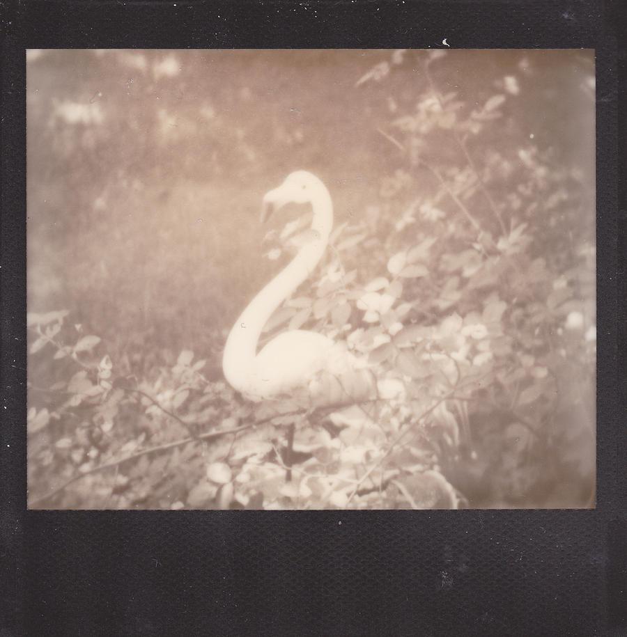 Flamingo Noir (DV) by thePARANOIDghost