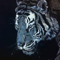 Monochrome tiger by Mariya-art