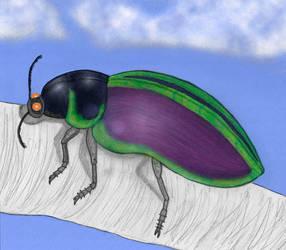 Skeeter Beetle Color by stacieyates