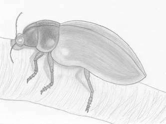 Skeeter Beetle Pencil by stacieyates