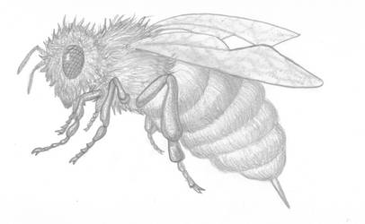 Bee Graphite by stacieyates