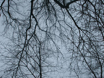 Tree Branches 1 of 3 by stacieyates