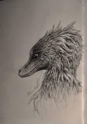 -Texas Raptor- by BackOcean