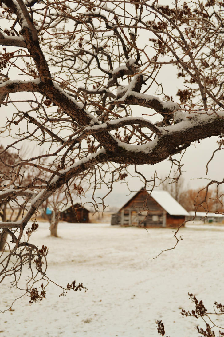 Snow on Lilac Branch by Reevah-Willow