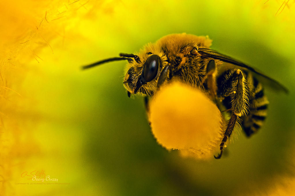 Beeing-Buzzy by Annetteks