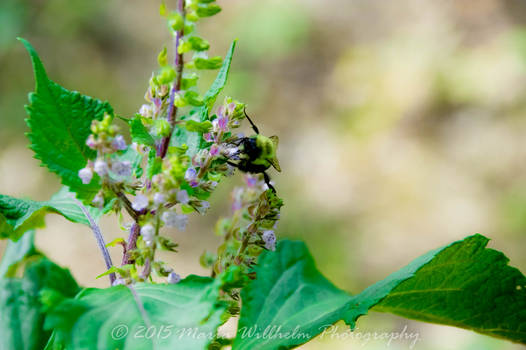 Busy Bee 9-13-370