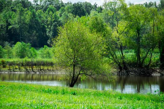 Tree Pond 9-13-350
