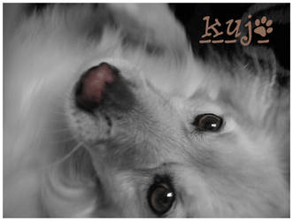 My Dog, Kujo by LemonLimeCola