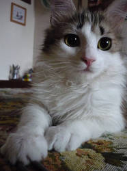 Kitty Cat Palu'